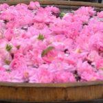 Фестиваль Роз Казаналэк, иксам, трансферы и туры по Болгарии, экскурсии
